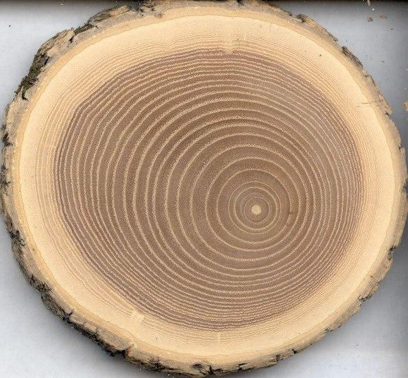 Основание деревянной бочки