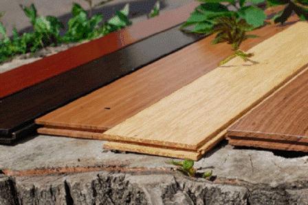 vibor drevesini dlya derevyannogo pola v dome