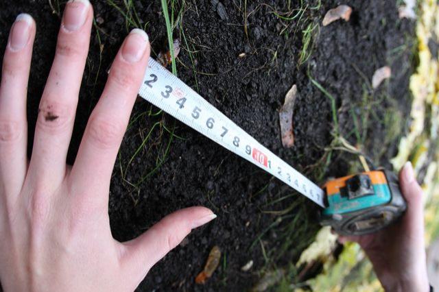 Расчет расстояния от ограды до дерева на участке