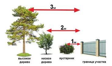 Расстояние «забор-дерево» по СНиП