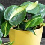 Какие растения запрещено выращивать в квартире