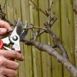 Обрезка деревьев: особенности и разновидности