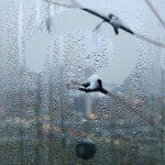 Как избавиться от конденсата на окнах