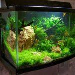 Из-за каких ошибок самодельный аквариум протекает и как этого избежать
