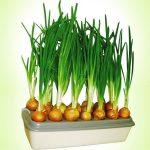 Установка для выращивания лука