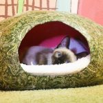 Креативный дом для кошки