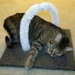 Как за пару минут сделать чесалку для пушистой кошки