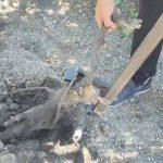 Корчеватель кустов для дачного участка своими руками