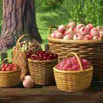 Самодельное приспособление для сбора фруктов и ягод на большой высоте