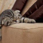 Как сделать щетку для чистки ковров и мебели от шерсти домашних животных