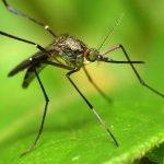 Надежная ловушка для москитов и комаров из подручных материалов