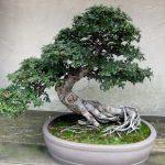 Как своими руками сделать искусcтвенное дерево бонсай