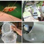 Действенная ловушка от насекомых для дома и дачи
