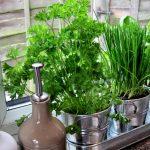 Как сделать домашний уголок для выращивания свежей зелени круглый год