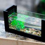 Как смастерить необычный аквариум своими руками