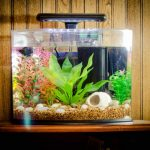 Как за один вечер сделать надежный аквариум для рыбок