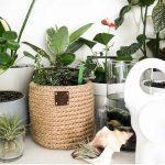 5 емкостей из которых можно смастерить отличное кашпо для комнатных цветов