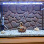 Как сделать красивый фон для аквариума из пенопласта
