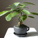 Как из косточки вырастить авокадо на подоконнике