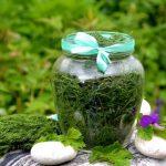 3 способа заготовить зелень на зиму