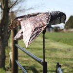 5 простых способов отвадить птиц от дома, чтобы они не портили крышу и балкон