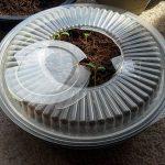 4 варианта использования пустой пластиковой коробки от торта