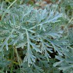 5 народных способов обработки растений на даче от вредителей