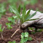 5 народных способов, которые помогут избавиться от сорняков на дачном участке