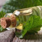 Эфирное масло мелиссы: свойства и польза