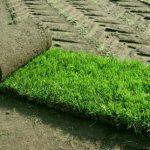 Рулонный газон: основные особенности и  правила выбора